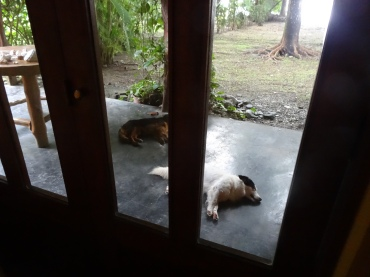 Typical morning waking up to Oreo and Cocoa laying on the back patio waiting for us.