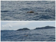 Turtles on our snorkeling boat trip.