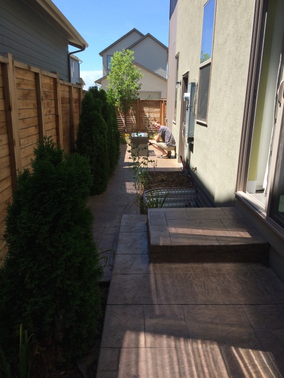An example of the tiny yards at the Stapleton homes we were interested in.