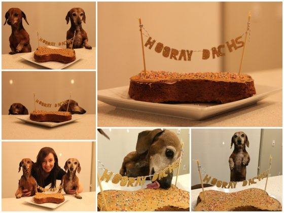 Dachshund_Birthday_Collage.jpg