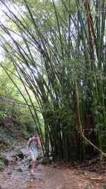 Bamboo!!!