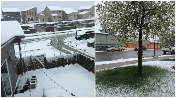 spring snow denver
