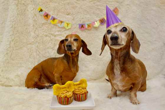 dachshund-birthday