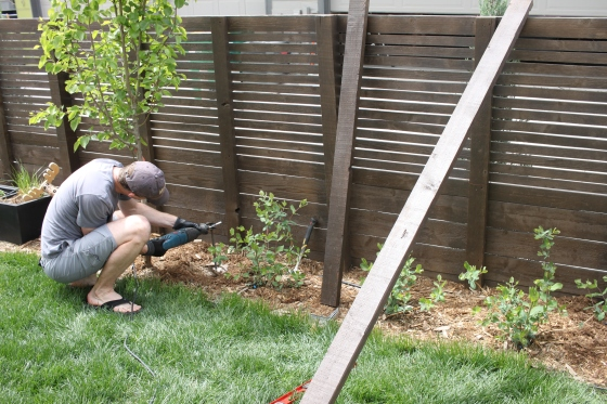 diy-trellis midtown