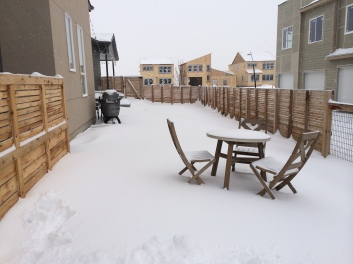 snowy yard 1