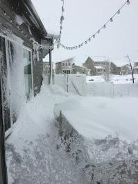 snowy yard 2