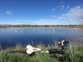 2019-04-21 e460 pelicans biking