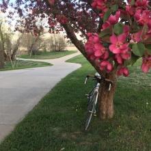 2019-04-27 biking arvada
